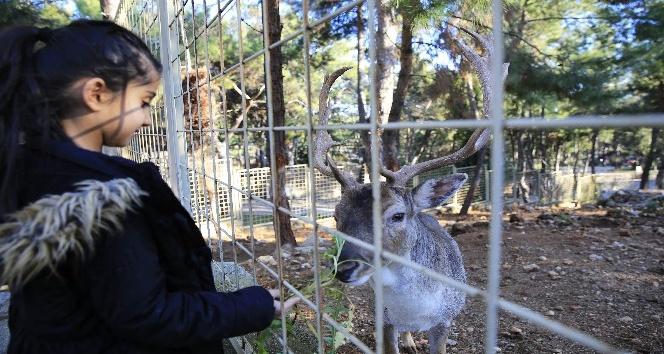 Hayvanat Bahçesi 1 yılda 570 bin kişiyi ağırladı