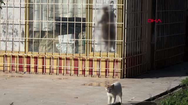 Antalya'da kediyi çelik telle asıp öldürdüler