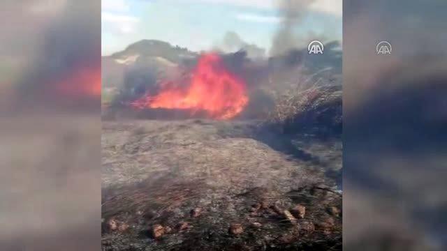 Serik'te çıkan yangında 10 dönüm sazlık ve palmiyelik alan zarar gördü