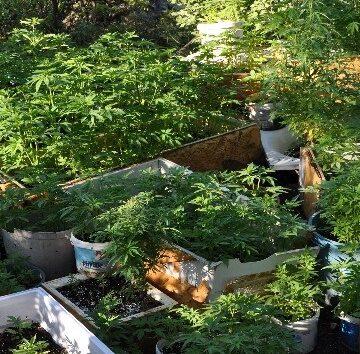 Hurdacılık şemsiyesi altında uyuşturucu ve sahte alkol üretimine polis baskını
