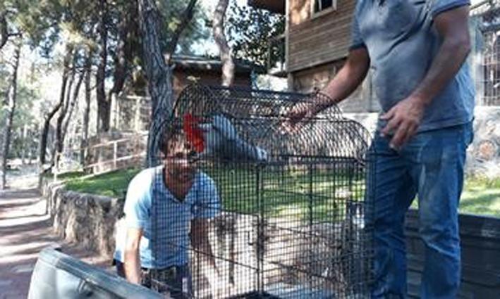 Antalya Jako Papağanına el konuldu