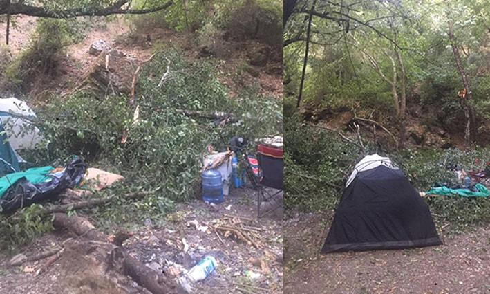 Kampçıların üzerine ağaç devrildi: 1'i ağır 4 yaralı