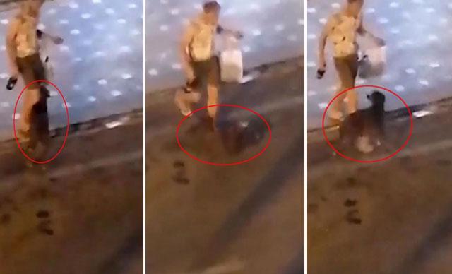 Alkollü turist, önce ATM'yi sonra sokak köpeğini tekmeledi