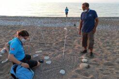 Antalya'da 2020 yılında 4 bin 842 yuvadan 204 bin 591 deniz kaplumbağası denizle buluştu