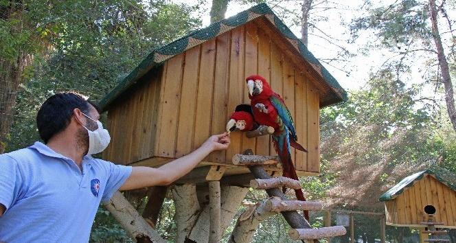 Hayvanat Bahçesi'nin yeni üyeleri Ara Papağanlar için özel yaşam alanı yapıldı