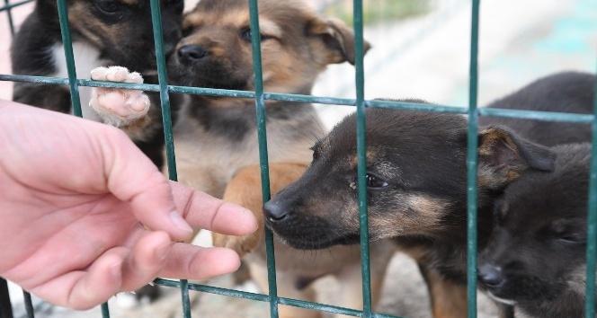 Konyaaltı'nda yılın ilk altı ayında 94 köpek ve 161 kediyi sahiplendirildi