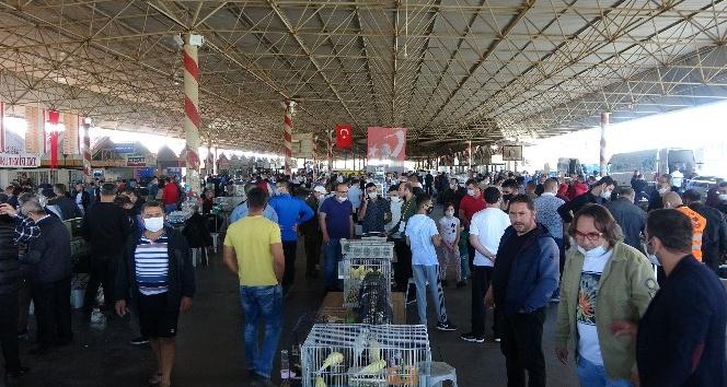 6 bin kanarya Antalya'da görücüye çıktı