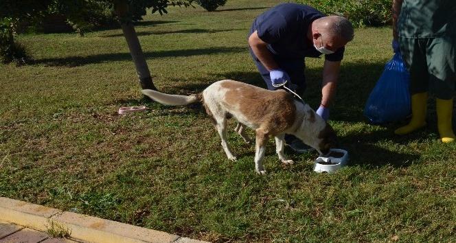 Kepez Belediyesi, yemek atıklarından organik kedi ve köpek maması üretti