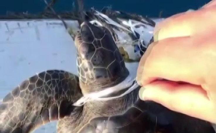 Denizdeki çöplere dolanan yavru caretta carettayı balıkçılar kurtardı