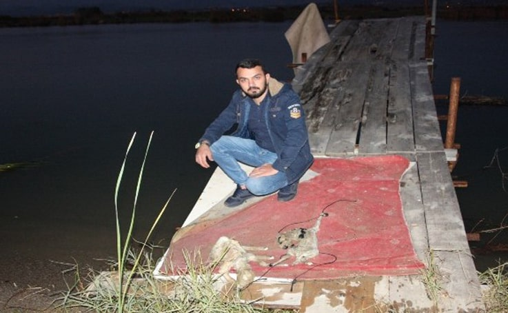 2 yavru kuzuyu ayaklarına ip bağlayıp Manavgat Irmağında ölüme terk ettiler