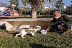 Kemer Belediyesi sokak hayvanlarının yanında