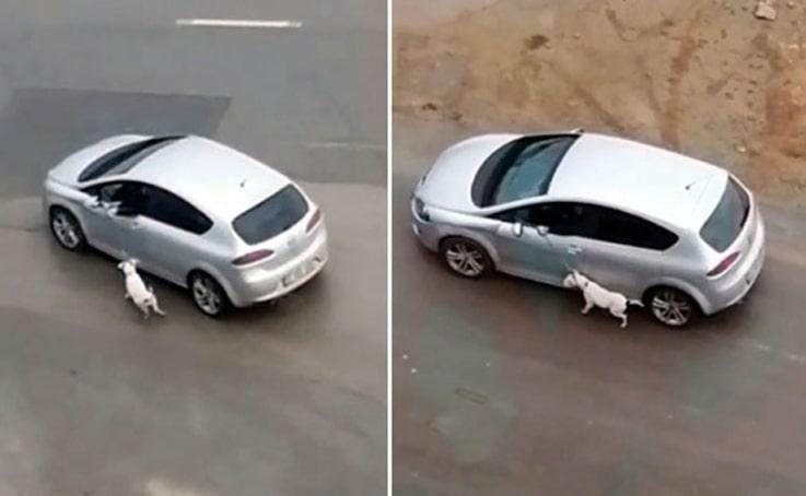 Araçla köpeğini tasmasından sürükleyen sürücü: Eğitim gereği