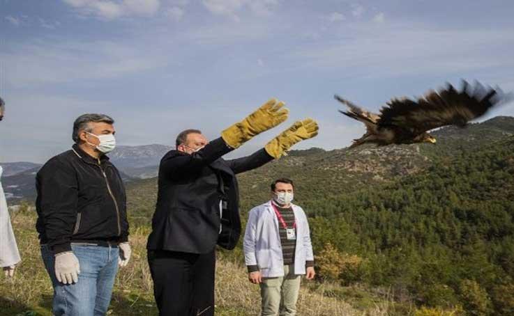 Alanya'da tedavisi tamamlanan 2 şahin ve kartal doğaya salındı
