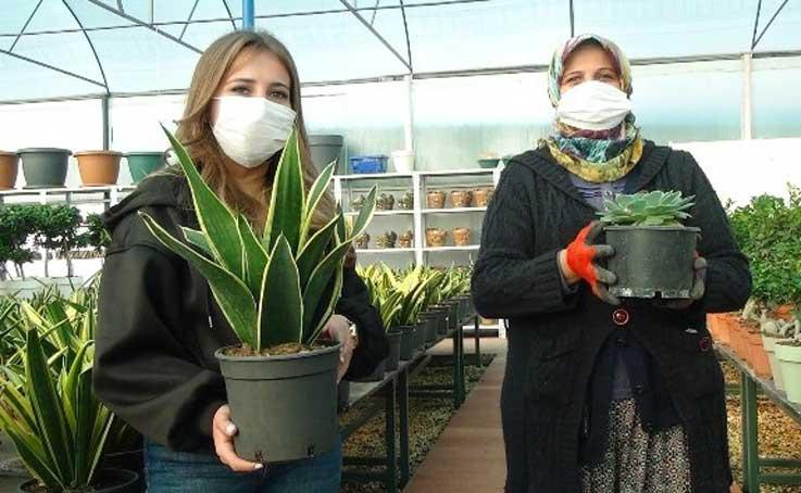 Süs bitkileri ve kaktüs üretimine sevgililer günü dopingi
