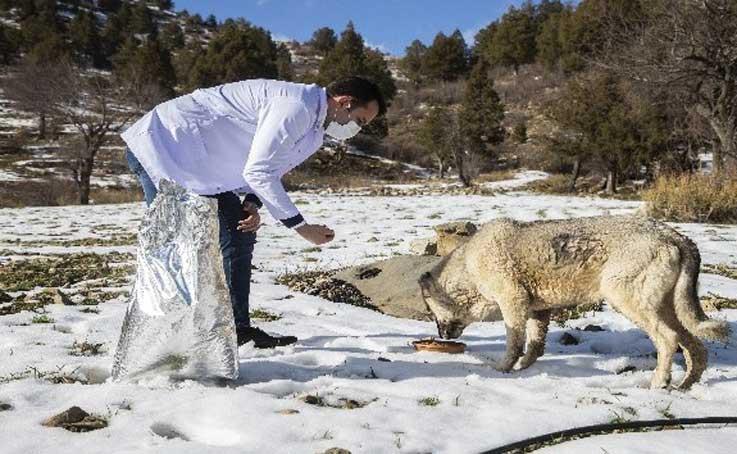 Kısıtlamada zorlu kış şartlarındaki hayvanlar unutulmadı