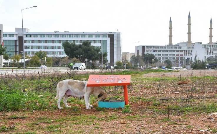Konyaaltı Belediyesi'nden, AÜ'ye beslenme odağı