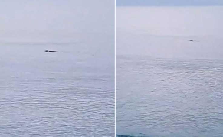Konyaaltı Sahili'nde fok balığı heyecanı