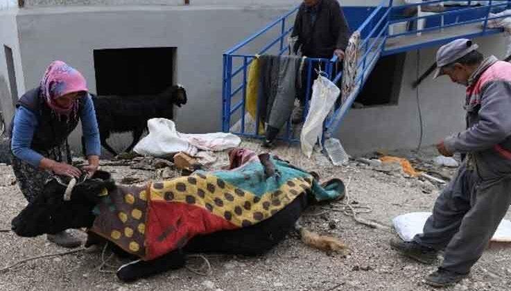 Uçuruma yuvarlanıp 2 gün sonra kurtarılan ineği üşümesin diye üzerini örtüp ateş yaktı