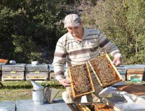 Antalya'da arıcılar yeni sezona hazırlanıyor