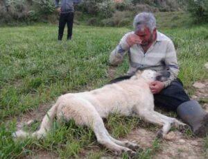 Vurularak öldürülen çoban köpeğinin başında gözyaşlarına boğuldu
