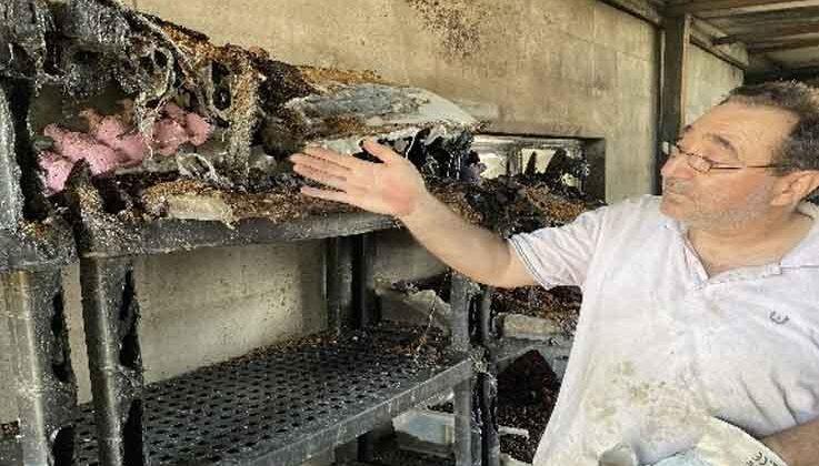 Çekirge üretim merkezinde çıkan yangında anaç böcekler tamamen yandı