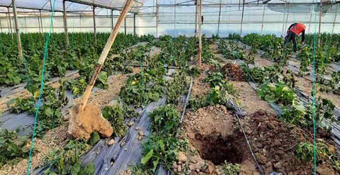 Antalya'da hortum seraya zarar verdi