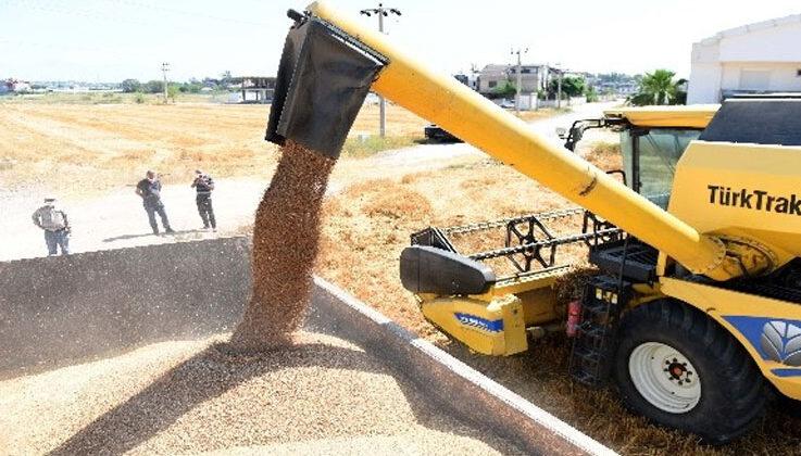 Muratpaşa Belediyesi 20 ton ürünü bulgur halinde ilçe sakinlerine dağıtacak, belediye aşevinde kullanacak.
