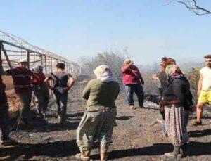 Antalya'daki arazi yangınında seraların naylon örtüleri ve zeytin ağaçları küle döndü