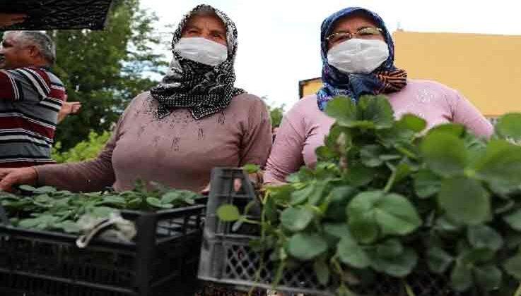 Çiftçilere organik tarım eğitimi verildi, çilek ve adaçayı fidesi dağıtıldı