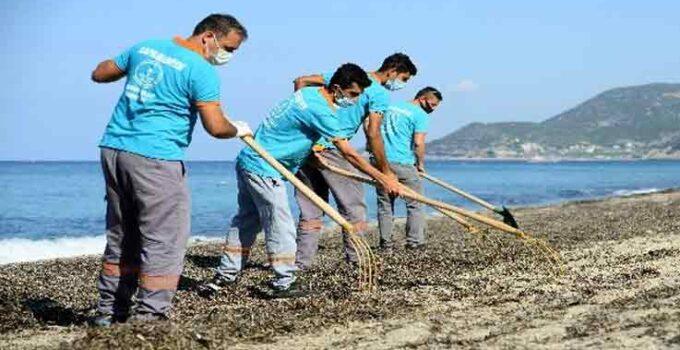 Alanya'da sahillerde yosunlar temizlendi