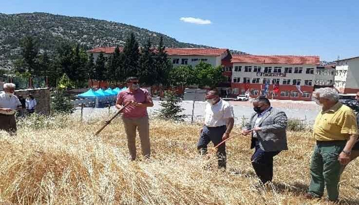 Akseki MYO'da buğday hasatı yapıldı