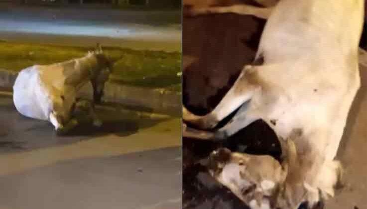 Antalya'da otomobilin çarptığı at telef oldu