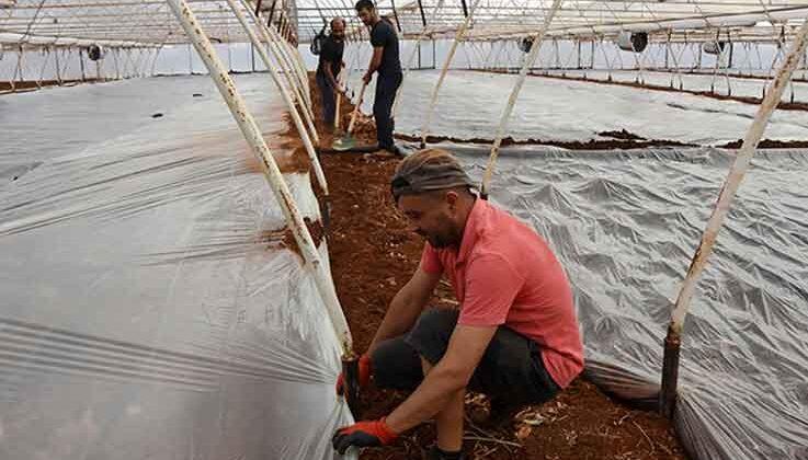Demre'deki seralarda doğal yöntemle toprak tedavisi: Solarizasyon