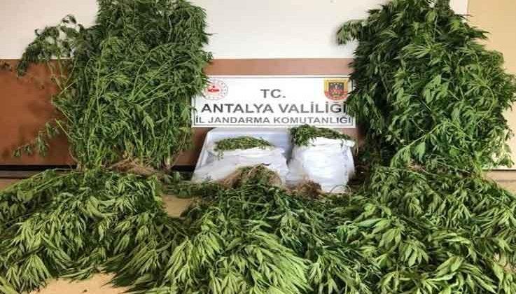 Alanya'da uyuşturucu operasyonu: 21 kilo 300 gram kubar esrar ele geçirildi