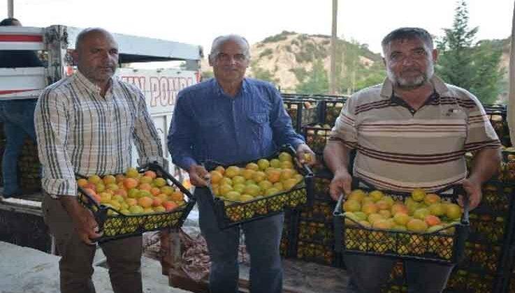 Korkuteli'de hasadına başlanan kayısının ilk ihracatı gerçekleştirildi