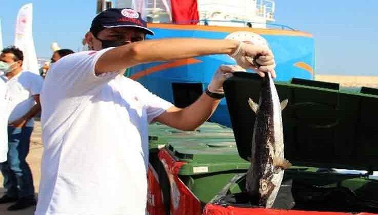 5 günde bin 500 benekli balon balığı yakalandı