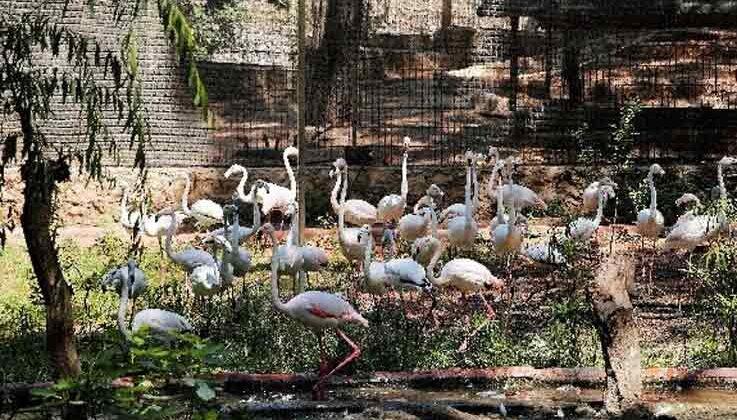 Yasadışı yollarla satılmak istenen 21 flamingoya el konuldu