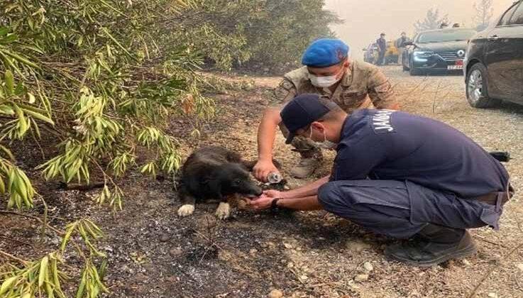 Alevlerin arasından kurtardıkları köpeğe, elleriyle su içirdiler